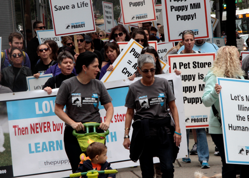 City Clerk Susana Mendoza Puppy Mill Project